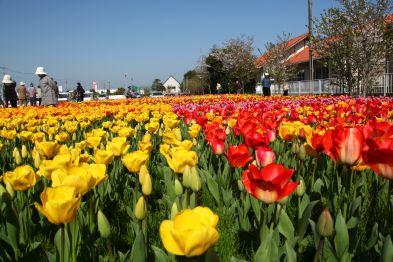 フォトコンクール:咲きほこる