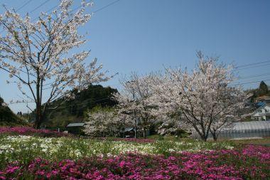 フォトコンクール:春の色彩