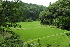 周辺には緑豊かな谷津田が広がるの画像