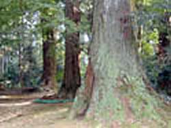 飯高寺の森の画像
