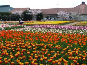 のさか花の広場の様子01