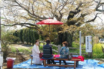 桜花の下で憩