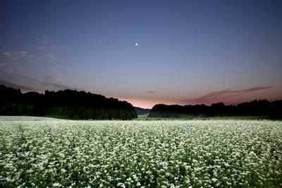 フォトコンクール:そば畑のある風景