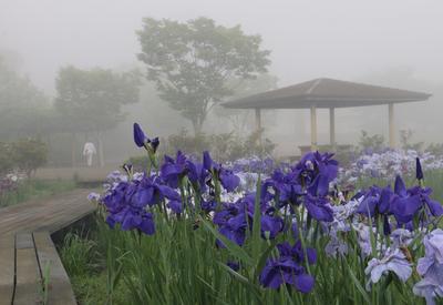 フォトコンクール:霧の朝