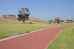 みどり豊かな広い公園の画像